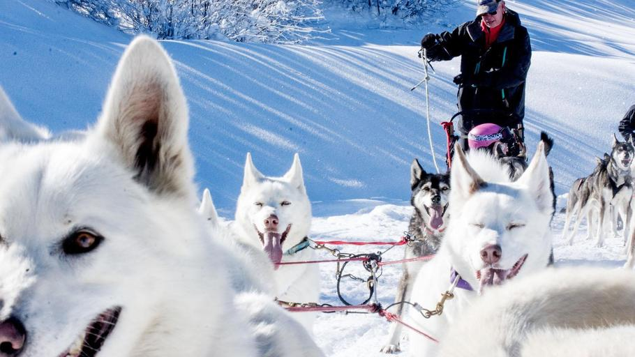 Dog Sledding - All Seasons Adventures